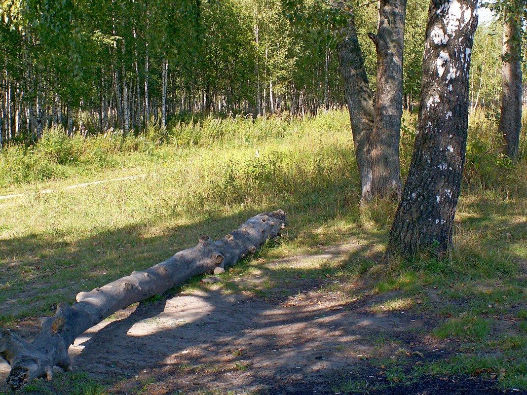 Тропинка в лесу - Вера Щукина