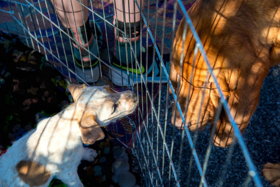 На распродаже щенков - MVMarina