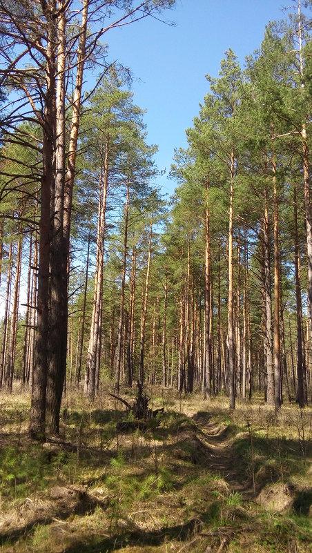 весенний лес - надежда
