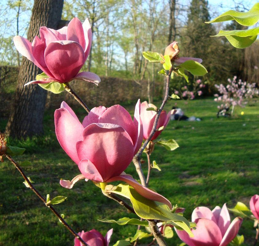Весенний вальс... - Lilly