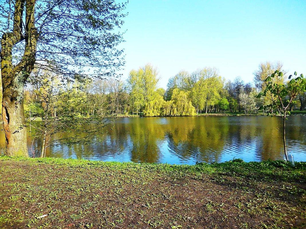 Утром на озере в парке - Маргарита Батырева
