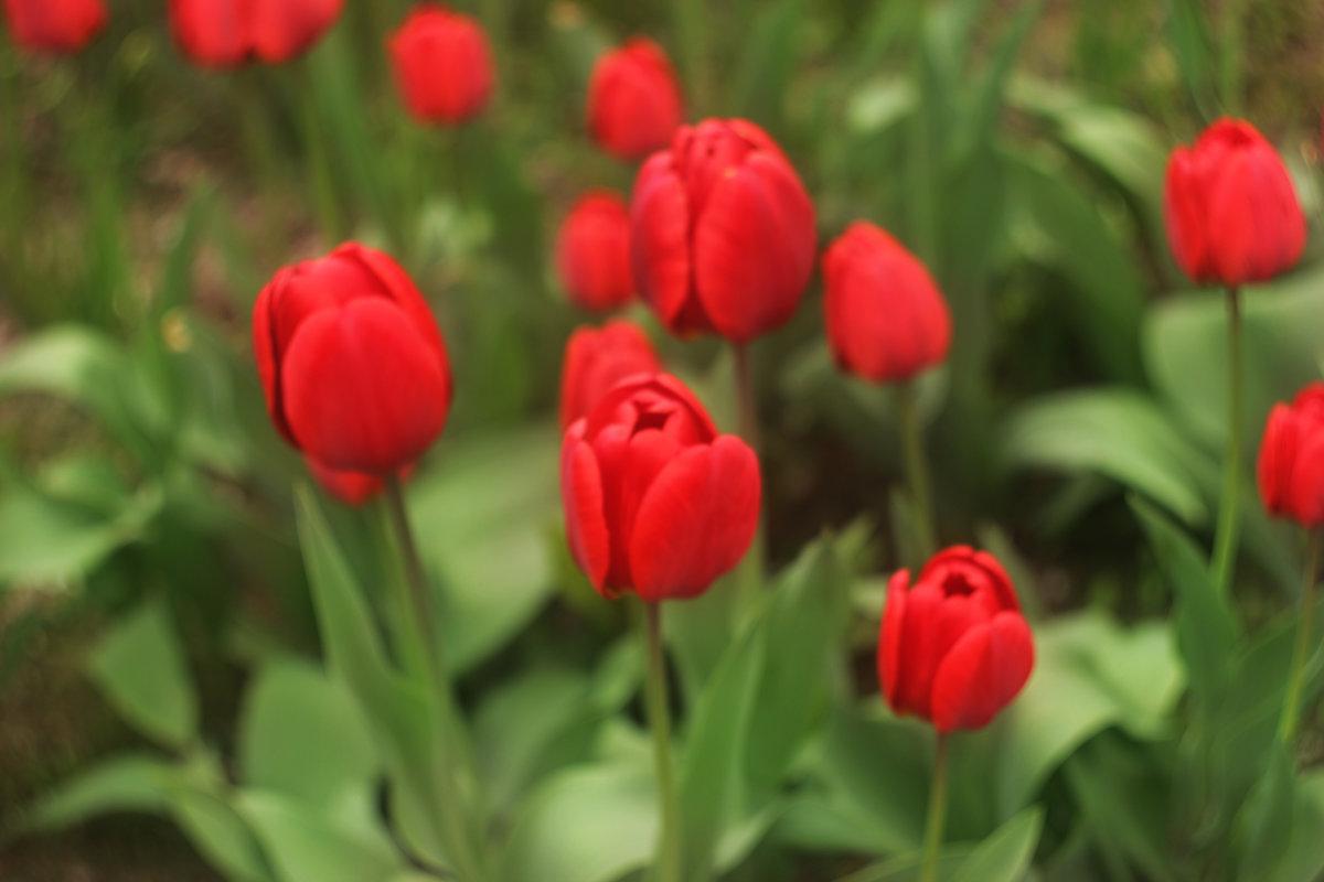 весна - Мария Фокина