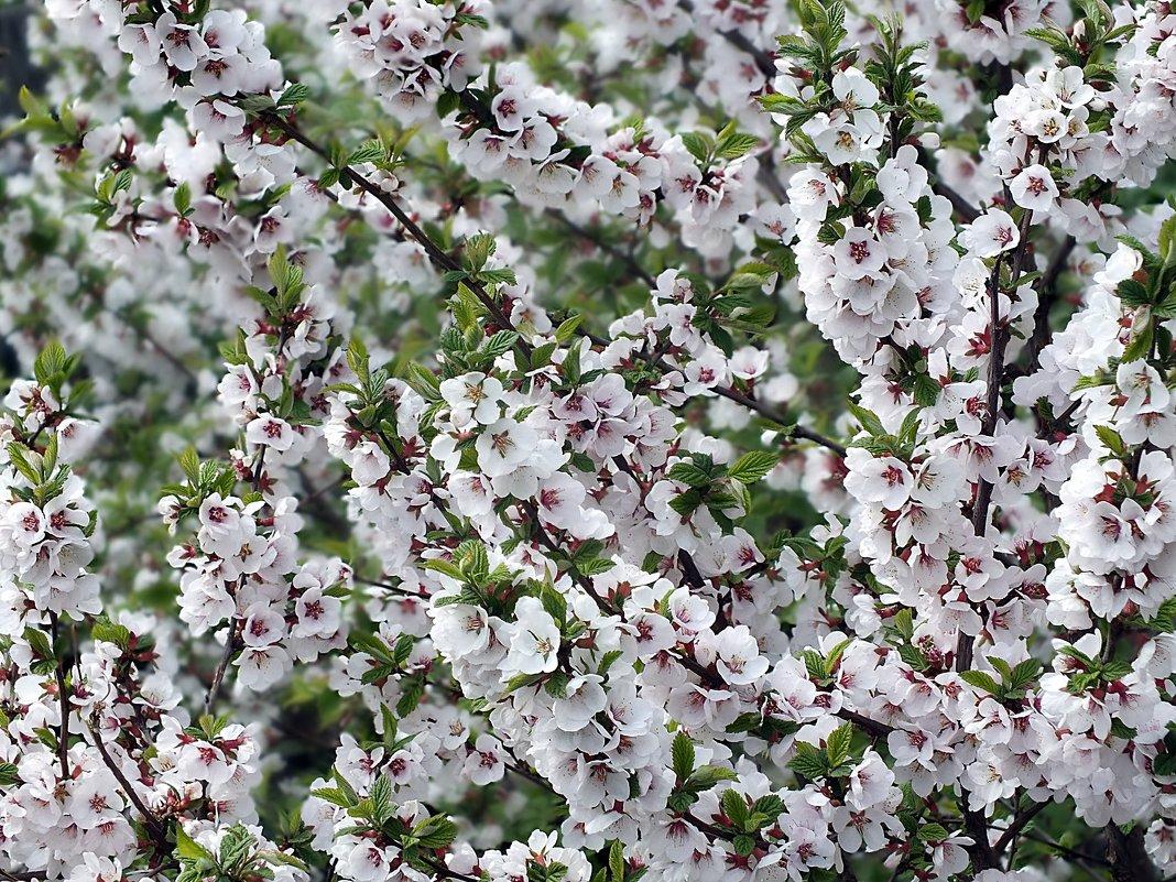 Весна - Зоя Мишина
