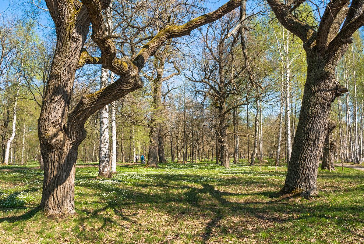 Весна пришла - Виталий