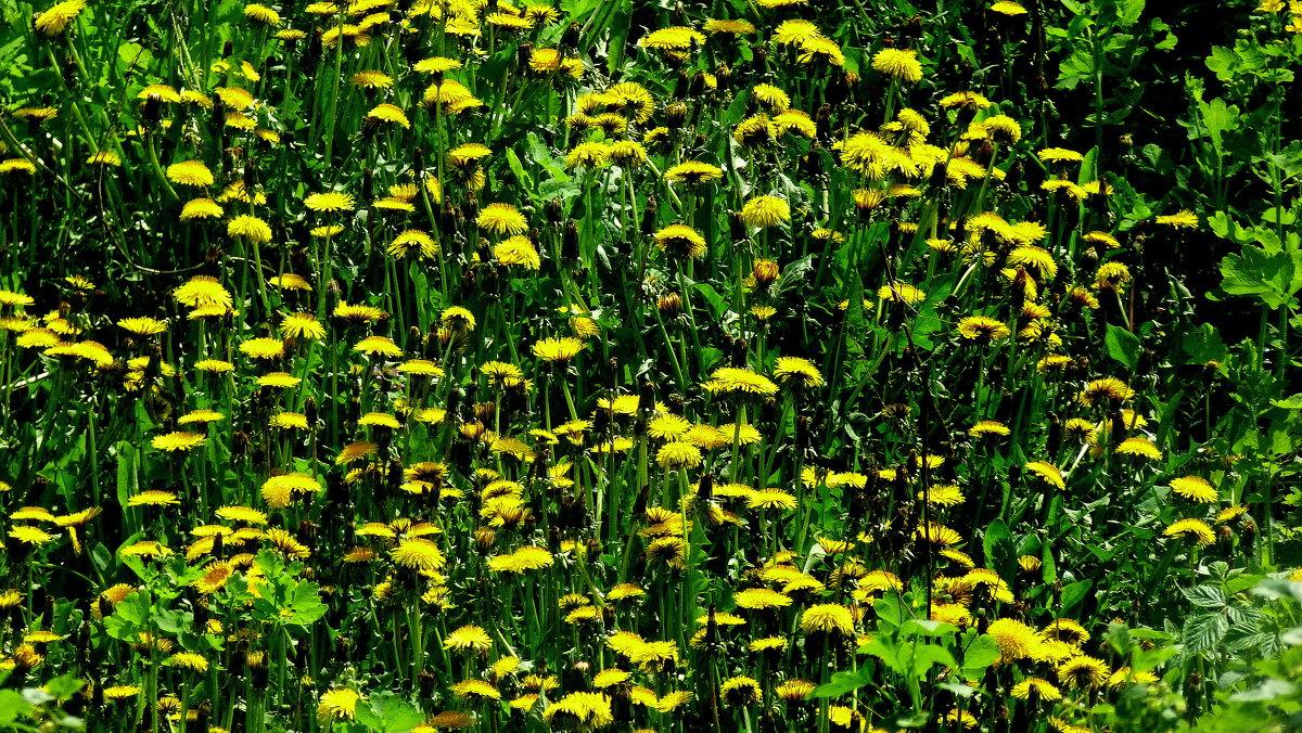 цветочные поляны фото
