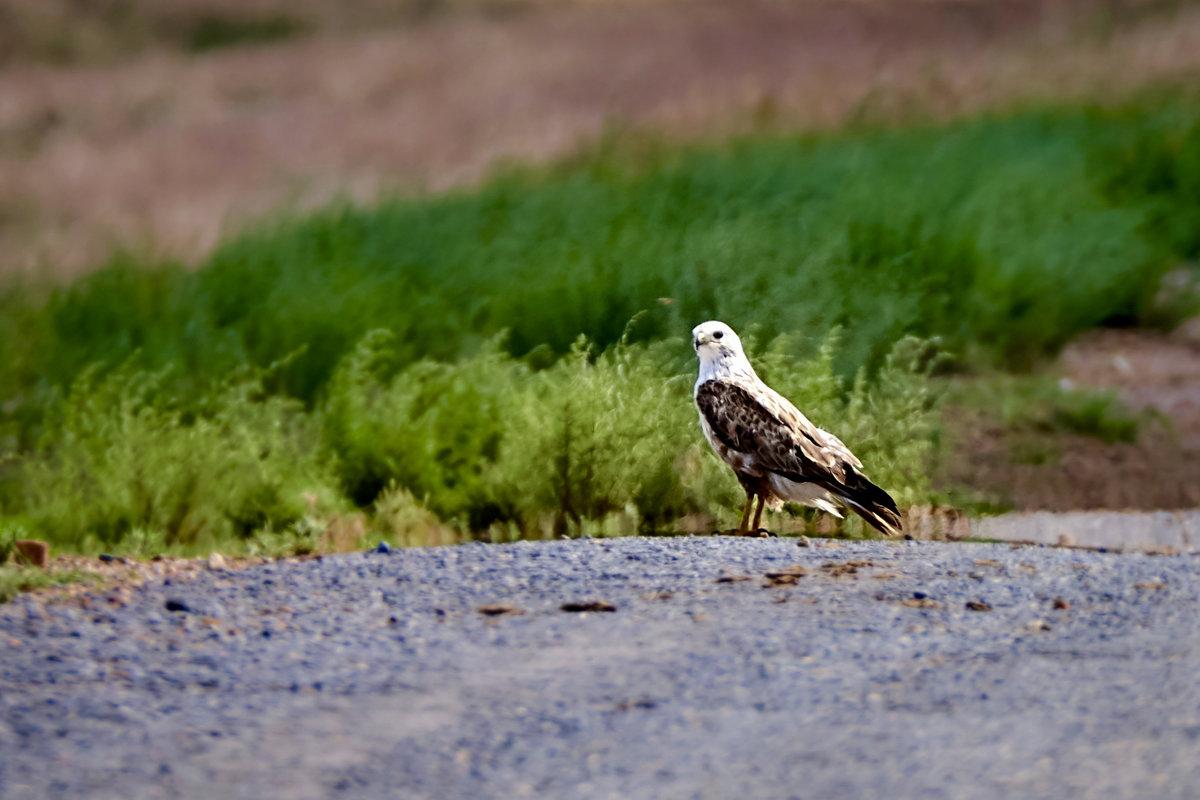 Грозный птиц - Сергей Рычков