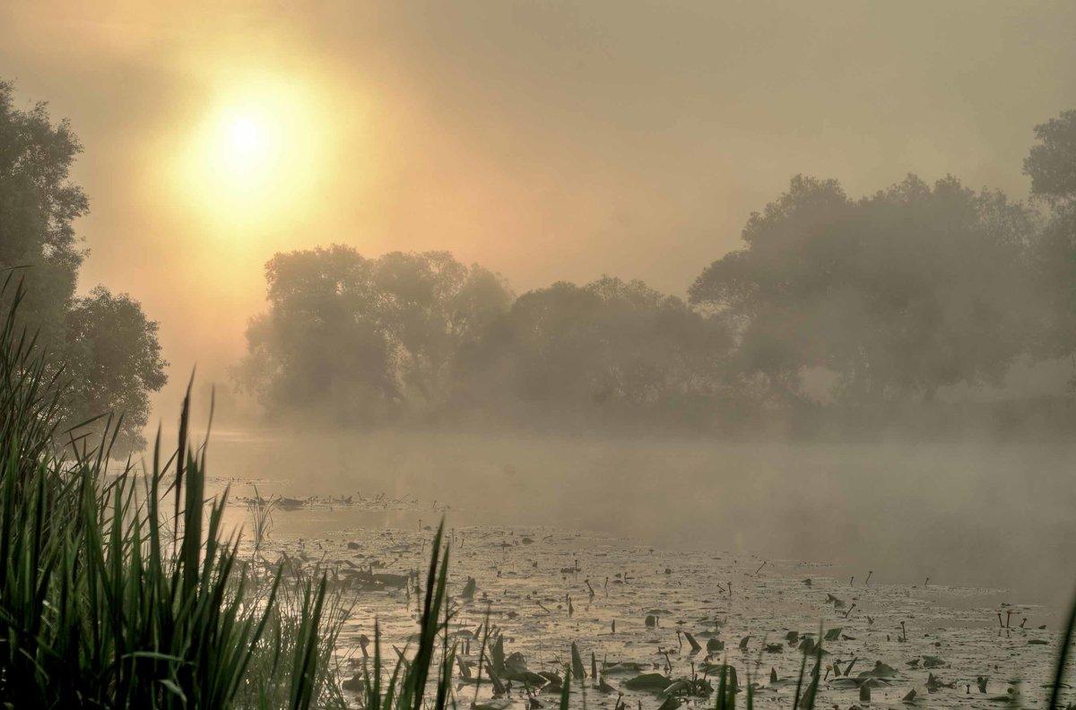 туманное утро - юрий иванов