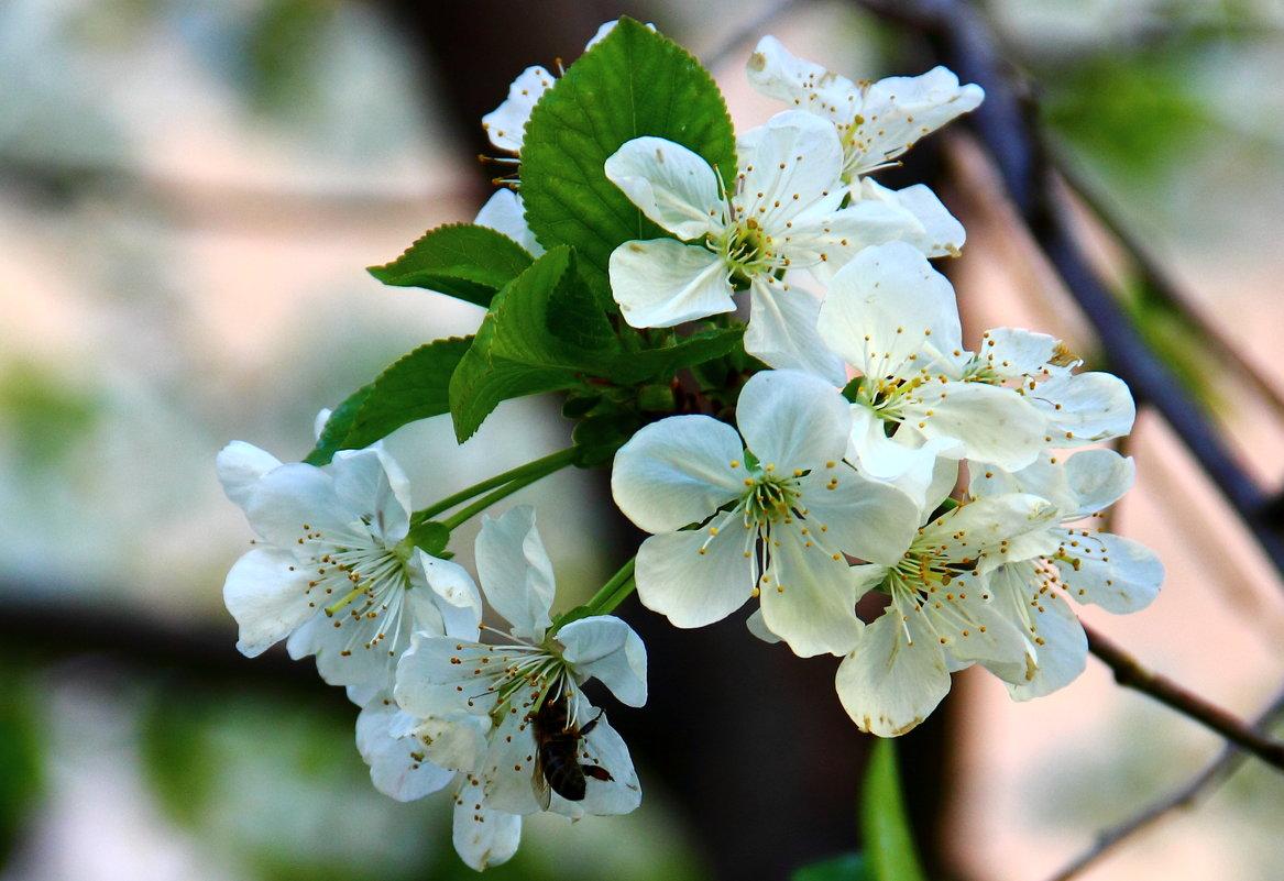 Воспоминания о весне - Светлана