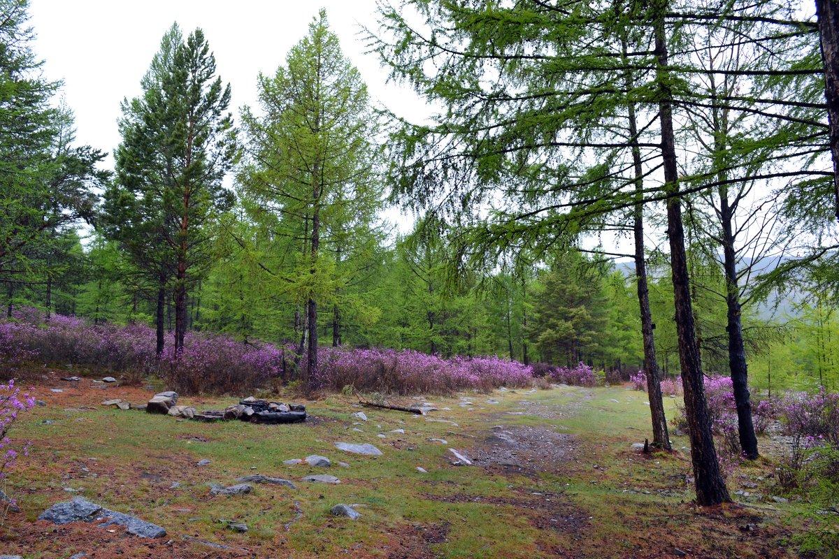 Дождь в лесу - Ольга