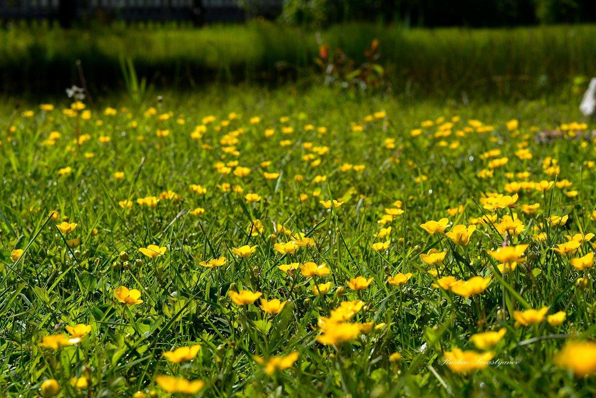 лето расцветка цветы - סּﮗRuslan HAIBIKE Sevastyanovסּﮗסּ
