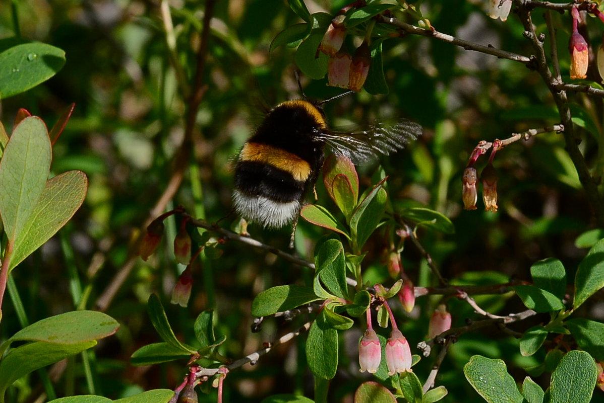 пчелка - סּﮗRuslan HAIBIKE Sevastyanovסּﮗסּ