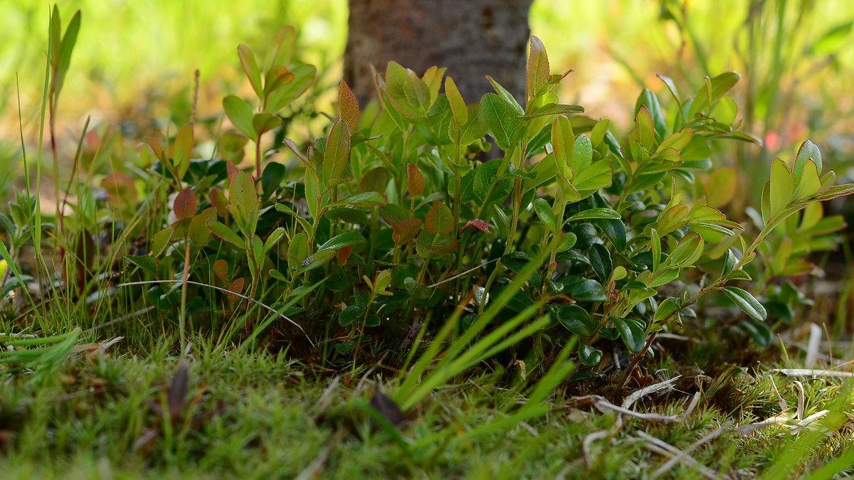 елка рядом с тобой трава зеленее - סּﮗRuslan HAIBIKE Sevastyanovסּﮗסּ