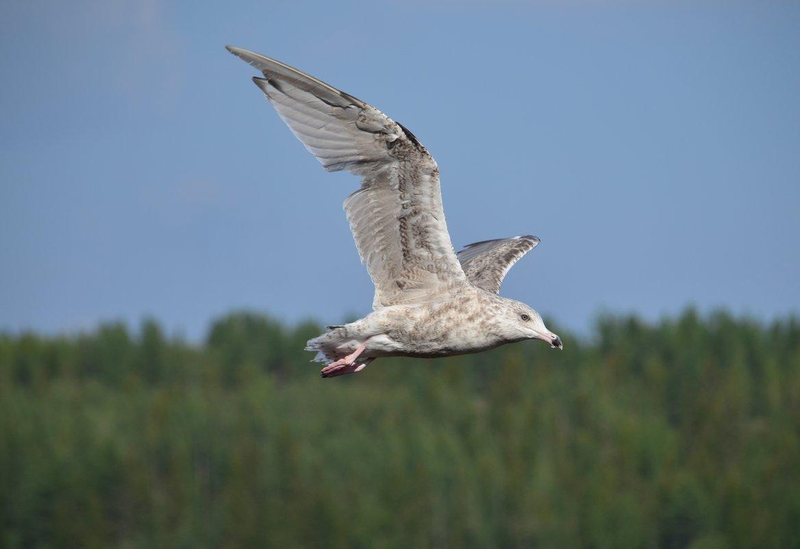 Море, а над морем чайки, чайки на просторе...... - Tatyana Nemchinova