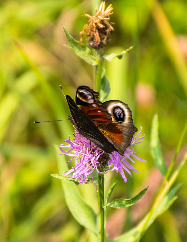 цветок и бабочка - Галина Кубарева