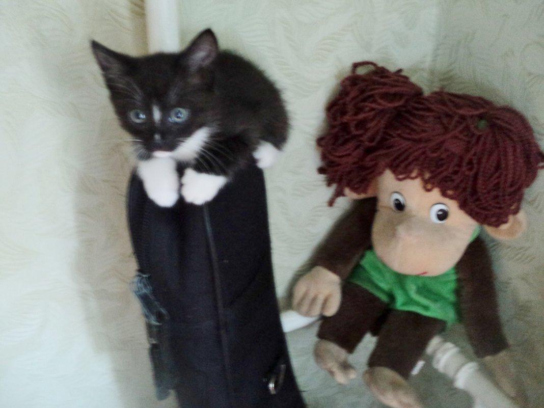 Я маленький котик, родился 7 июля, ищу хозяина, я воспитан и приучен! - Ольга Кривых