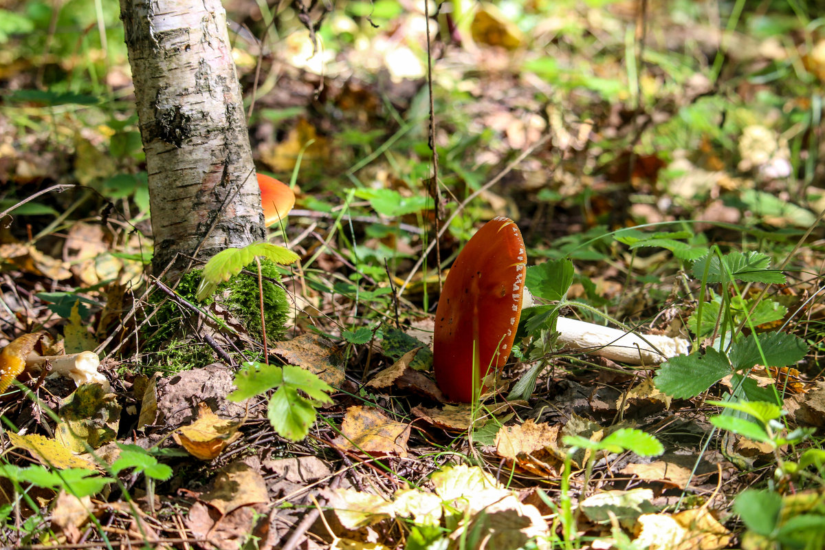 В лесу - Ольга Перевалова