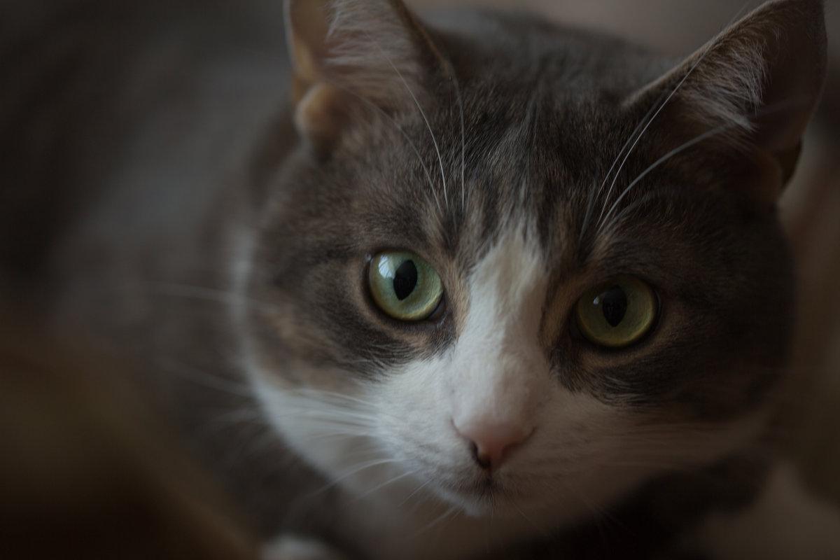 кот - Julia