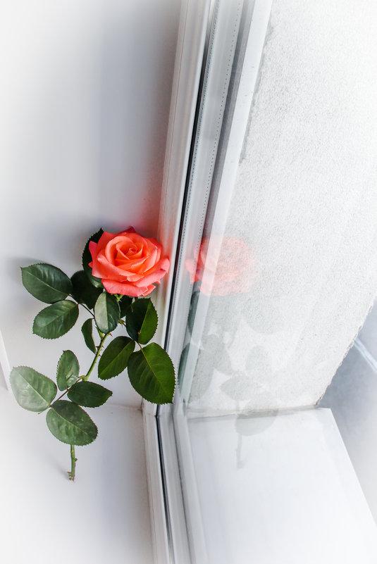 Роза 2. - Alexandra G.