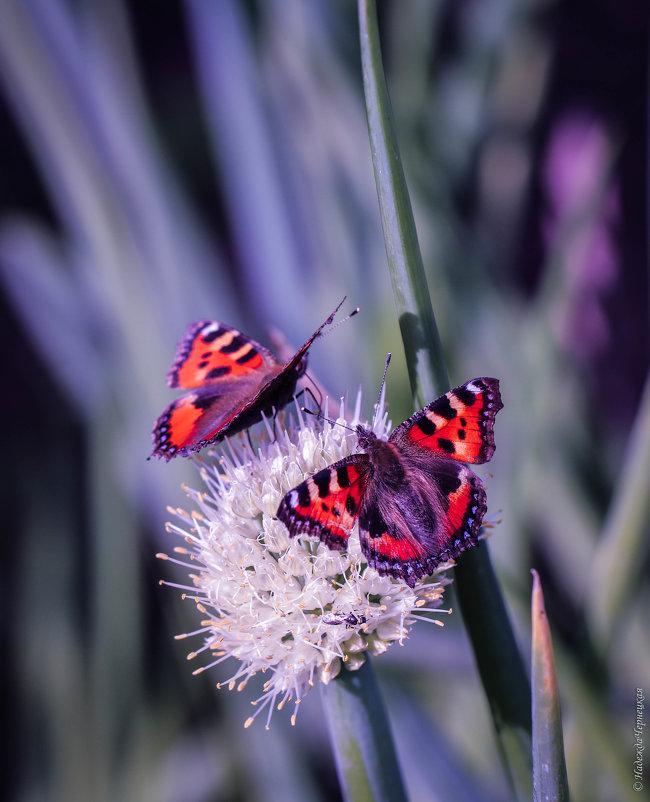 Две бабочки и одна мушка - Надежда Чернецкая