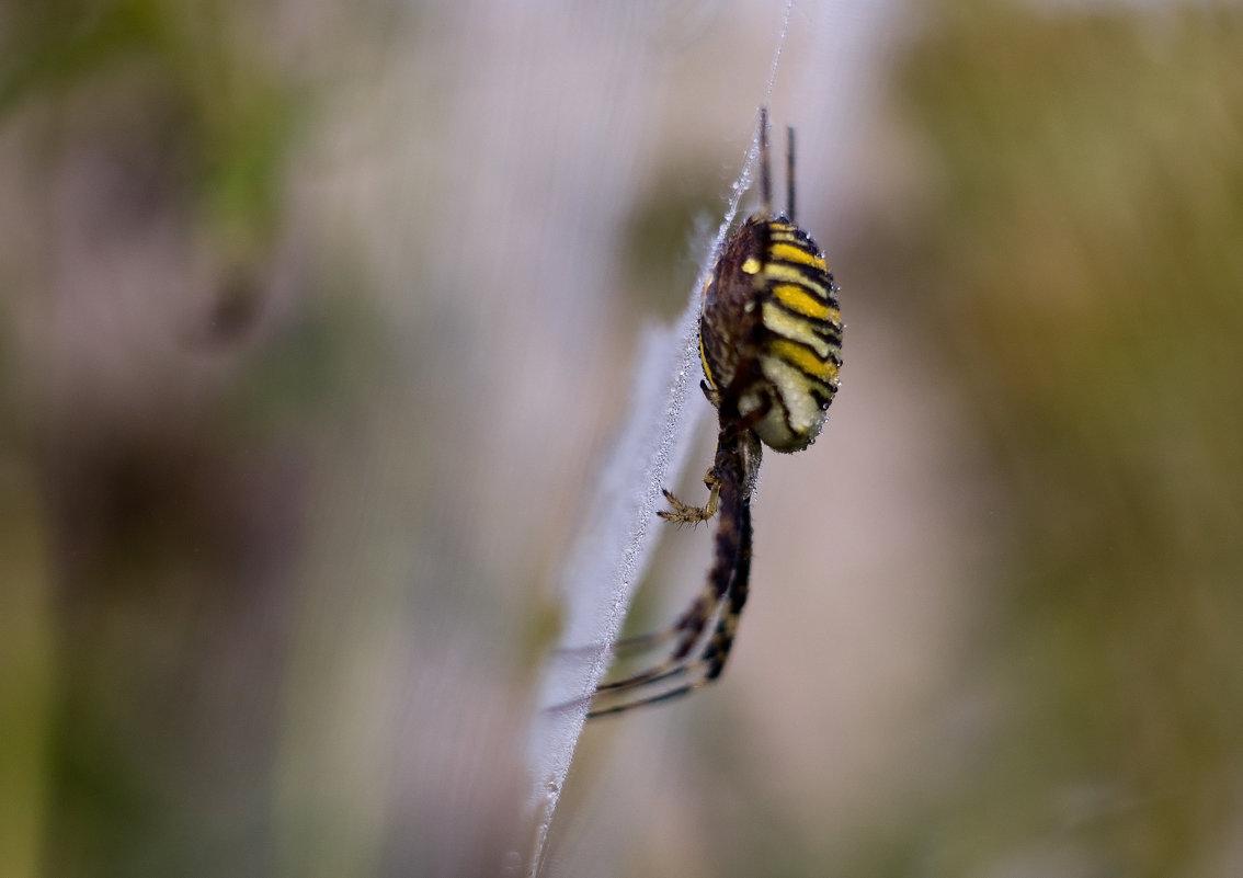 паук в росе - Евгений
