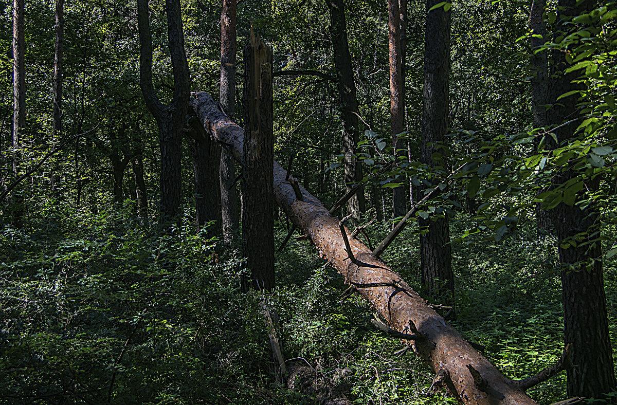 Ветер пролетел - Яков Реймер