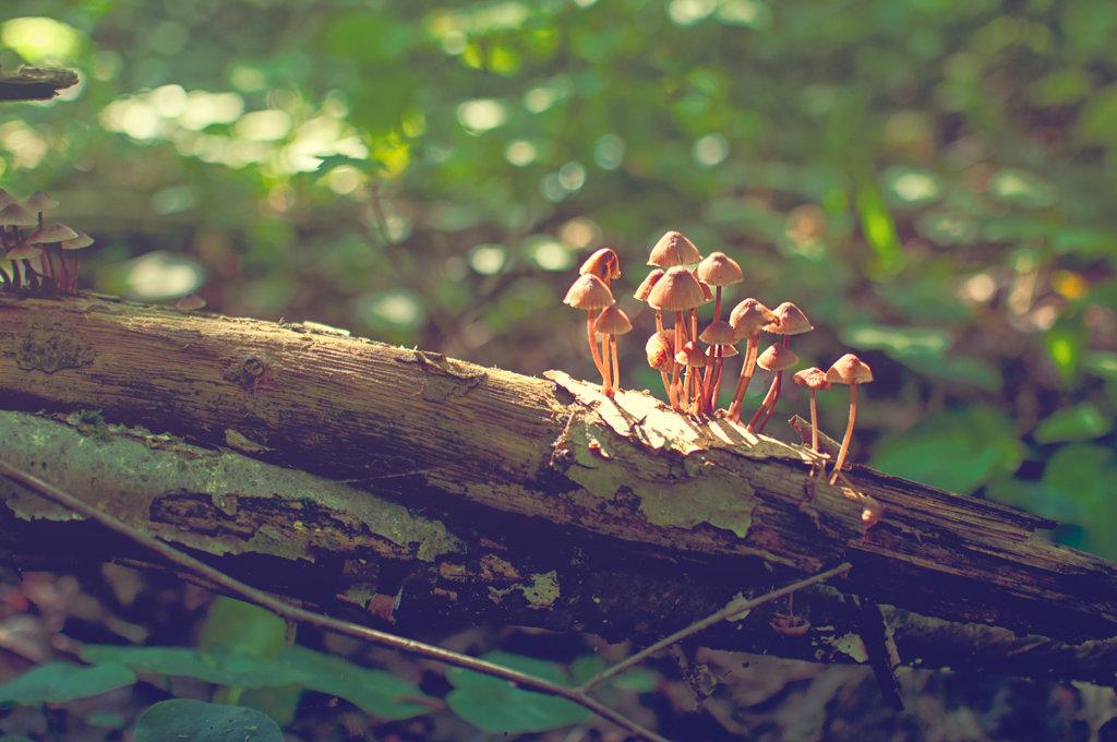 грибы - Тася Тыжфотографиня