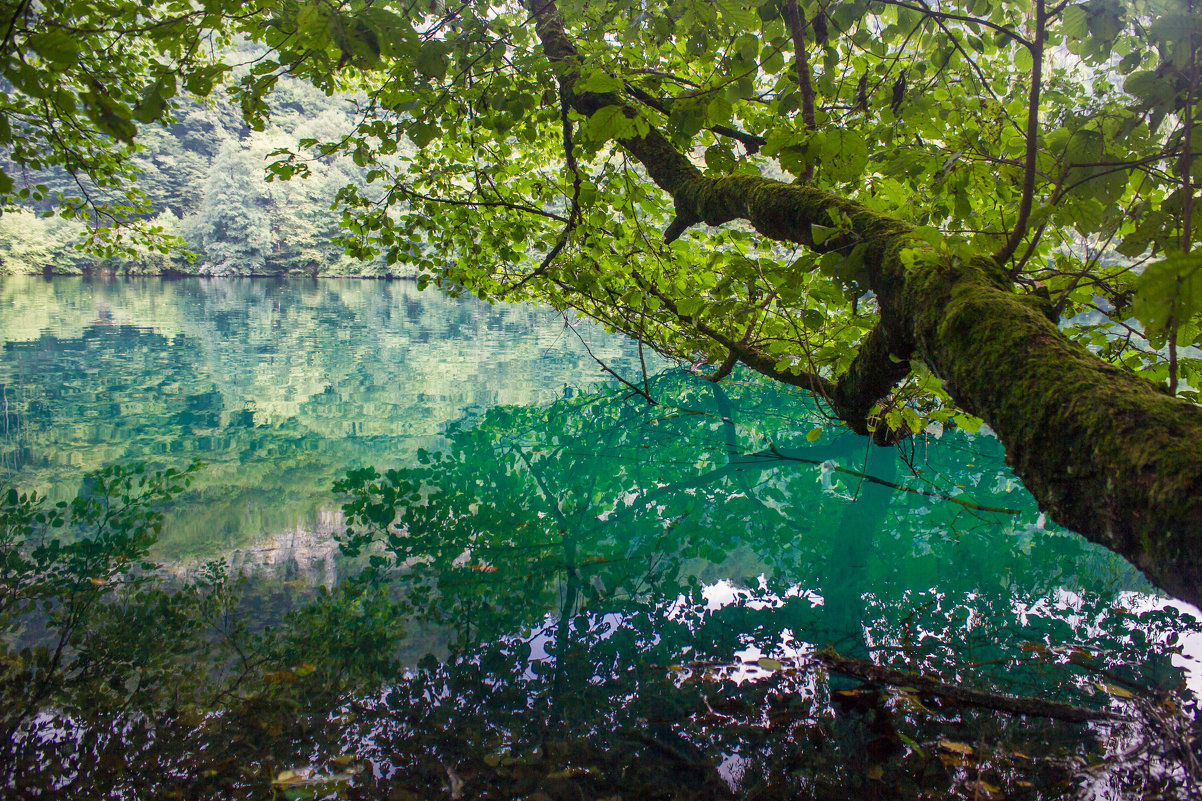 IMG_5355-1 Голубое оз водоросли - Олег Петрушин