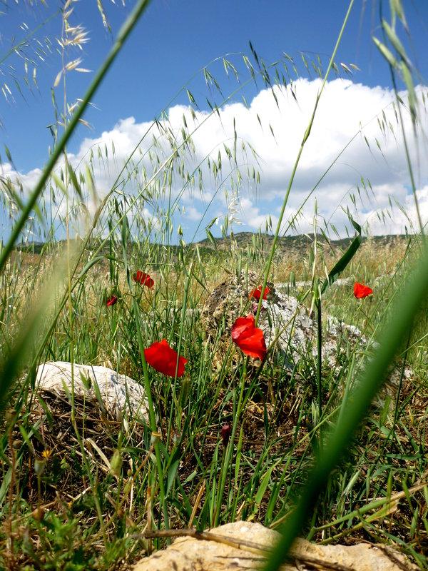 Турецкие горы - Viktoria Petrova