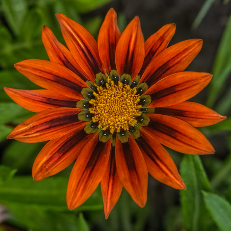 цветы - snd63 Сергей