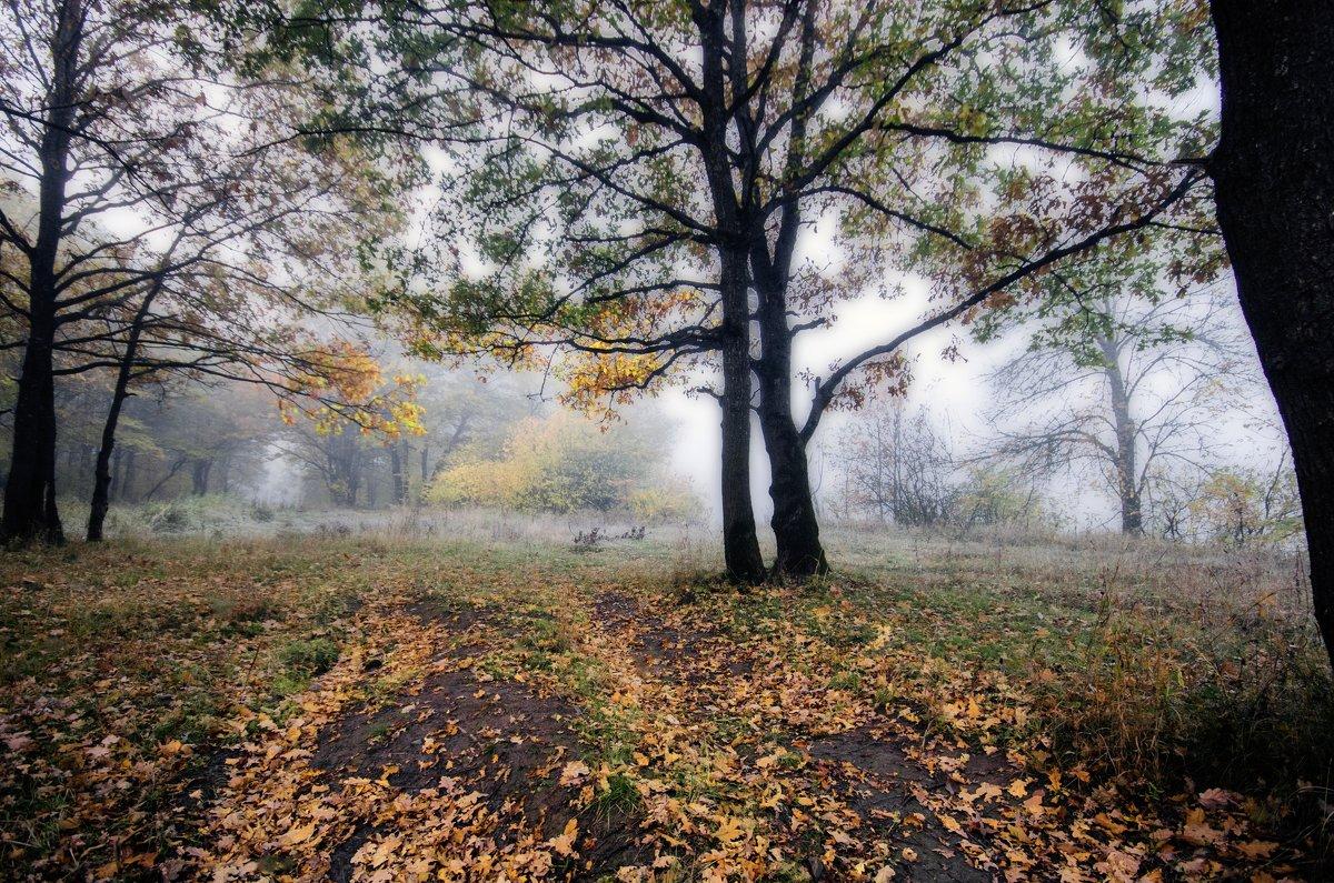 Осень. Утренний туман - Дубовцев Евгений