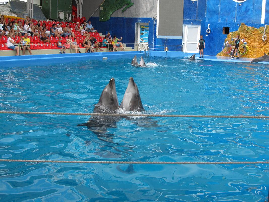 Дельфины танцуют - Яна Чепик