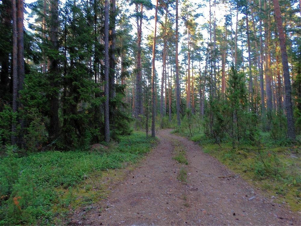 Вечерняя дорога - Svetlana27