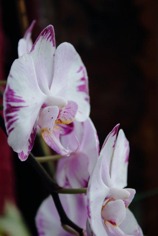 Цветок - Евгений