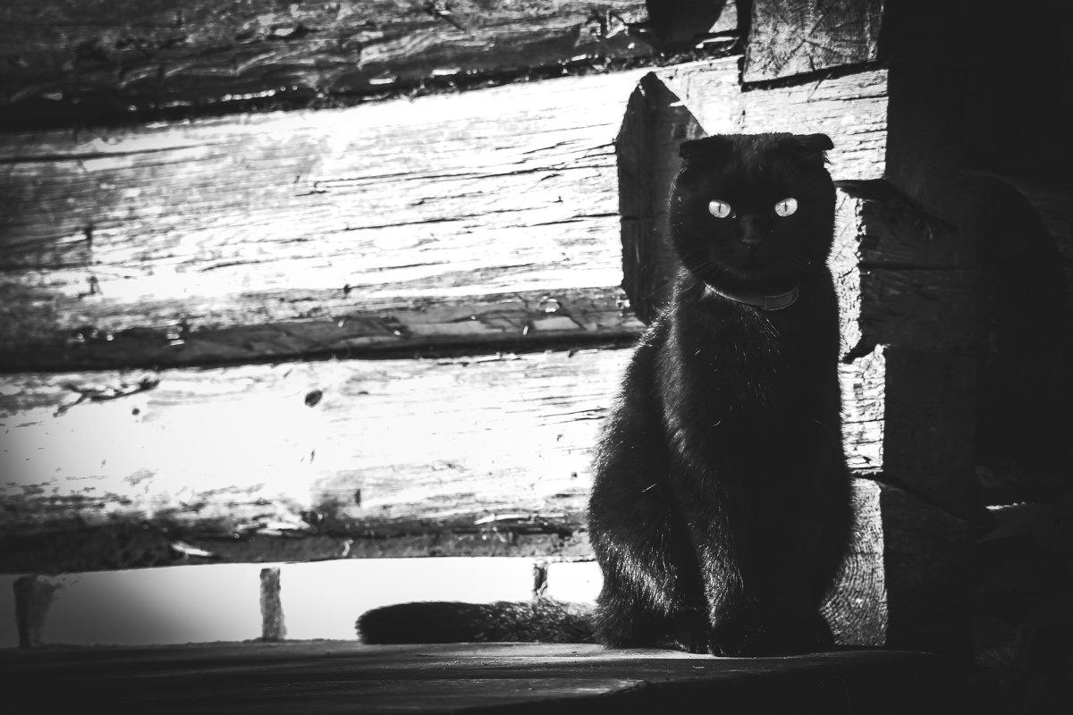 Я ночь...я тьма... - Ольга Перевалова
