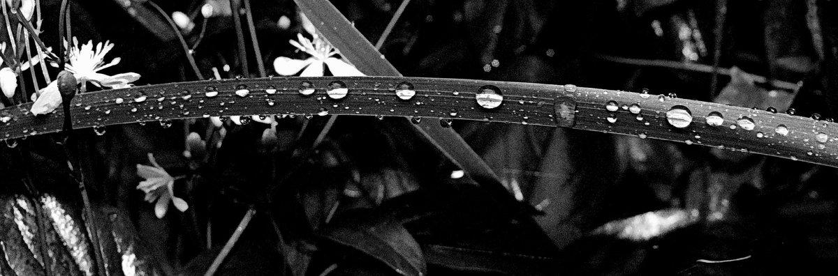 Еще не высох дождь вчерашний... - tankist Алексей