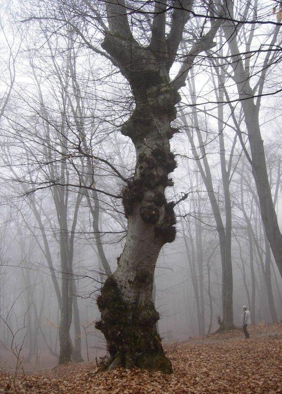 Дерево - Виталий Купченко