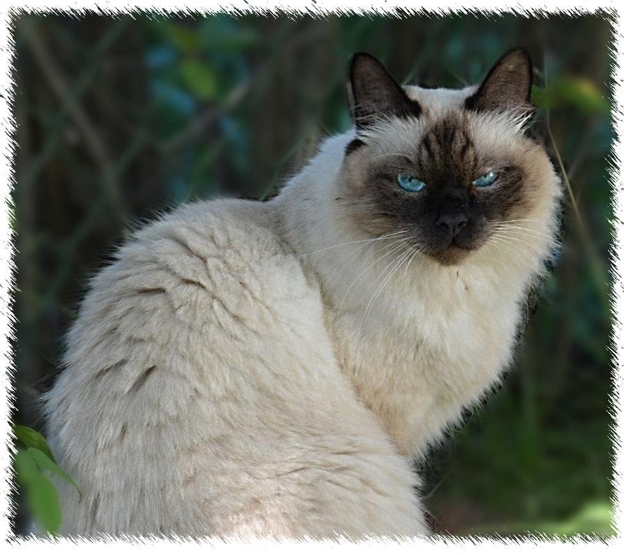 портрет кота - Наталия П