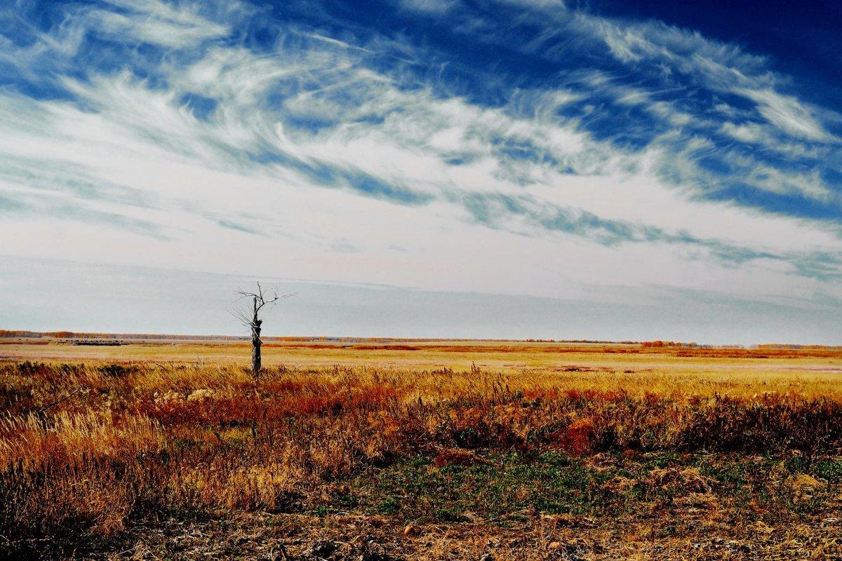 Сухое дерево в степи - Валерий Подобный