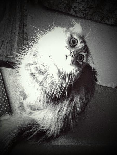 Магический кошачий взгляд - Наталия Каминская
