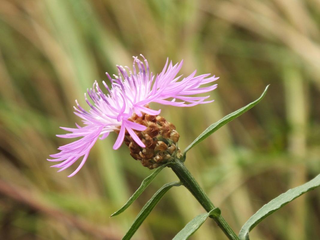 цветок - prokyl