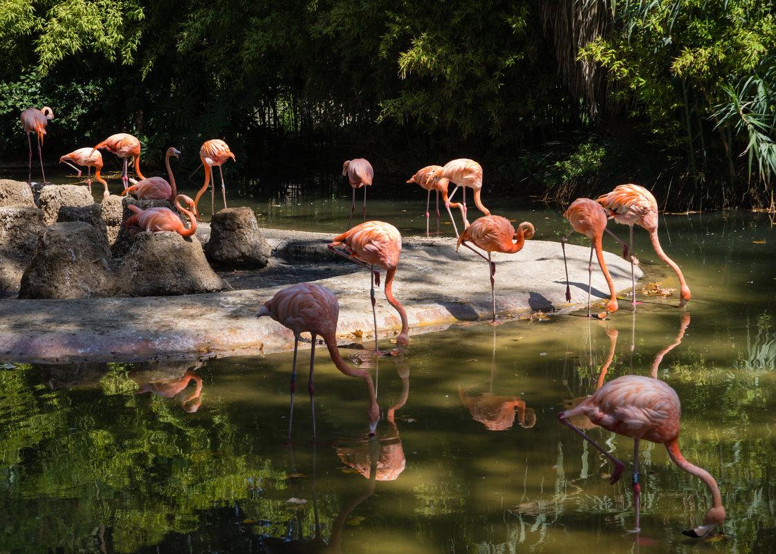 розовые птицы - Vasiliy V. Rechevskiy