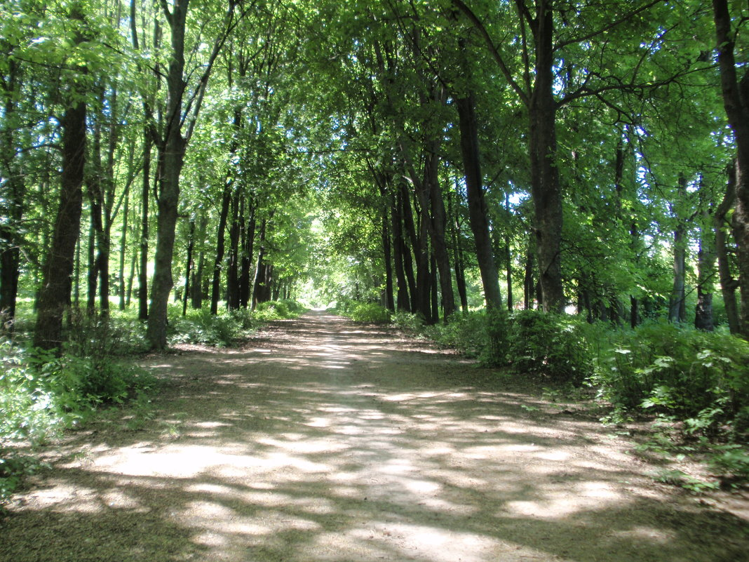 Парк - Владимир