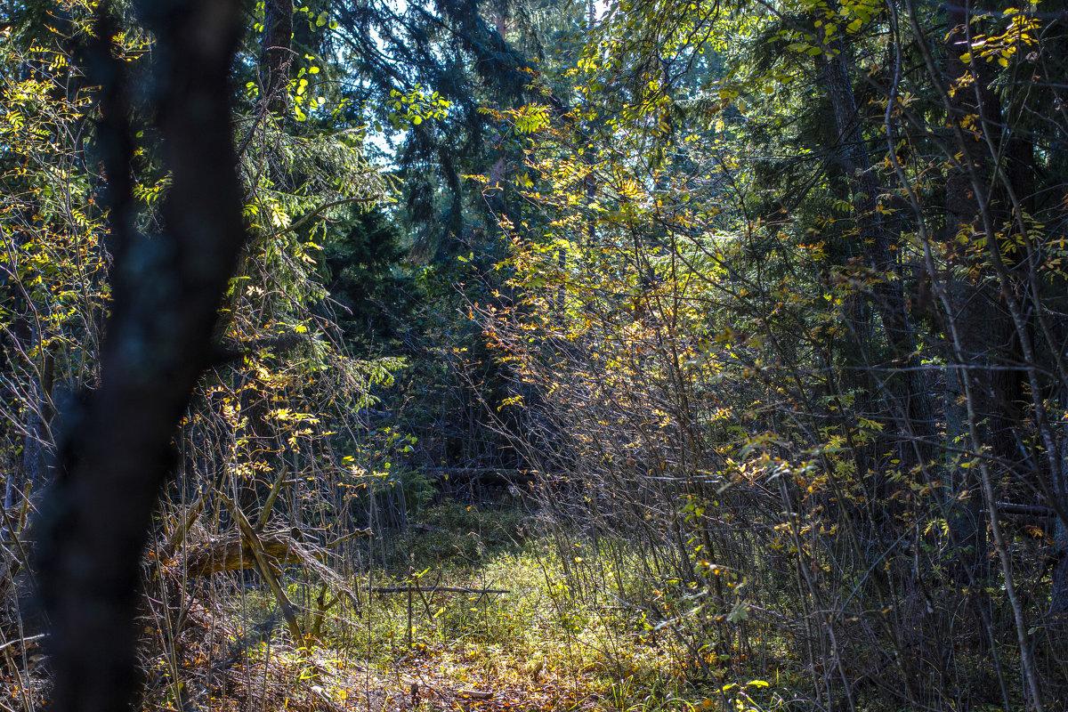 В лесу - Алексей