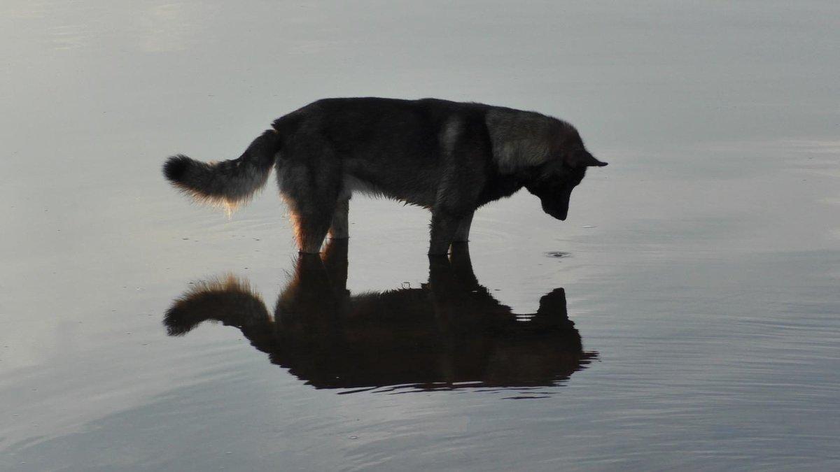 Смотрю в себя, как в зеркало - Ирина Останина