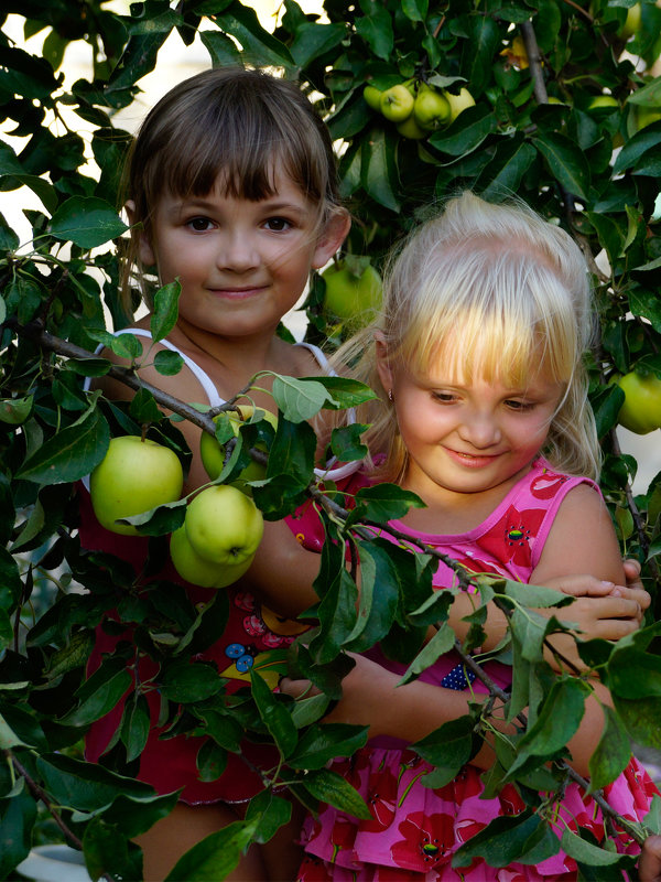 девочки с яблоками - Наталия Сарана