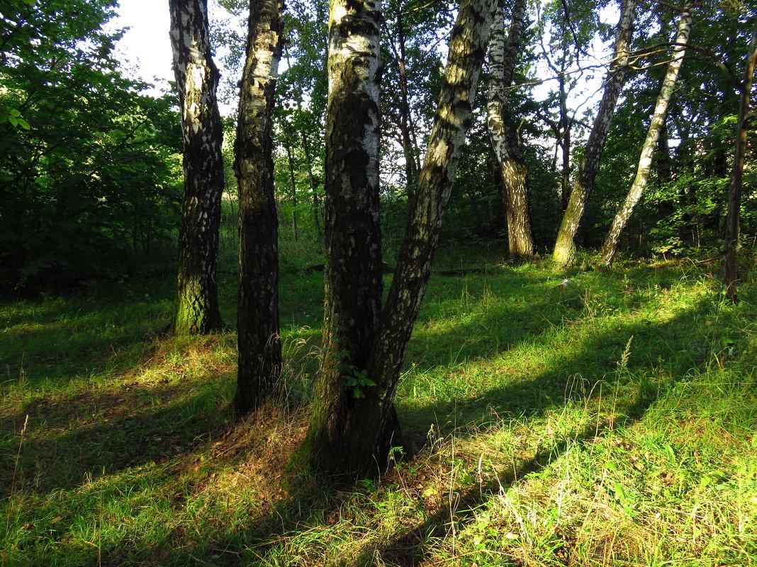 Как я провожал лето - Андрей Лукьянов