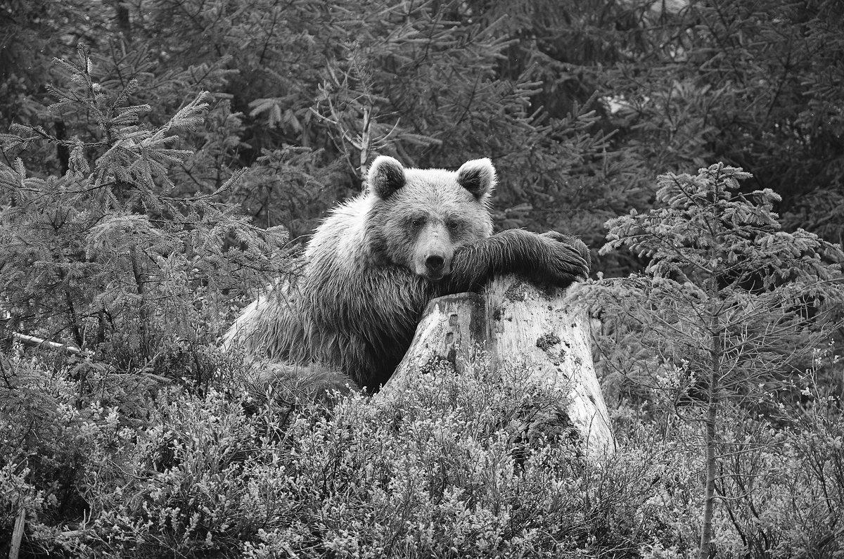 Грустно в лесу.. - Олег Нигматуллин