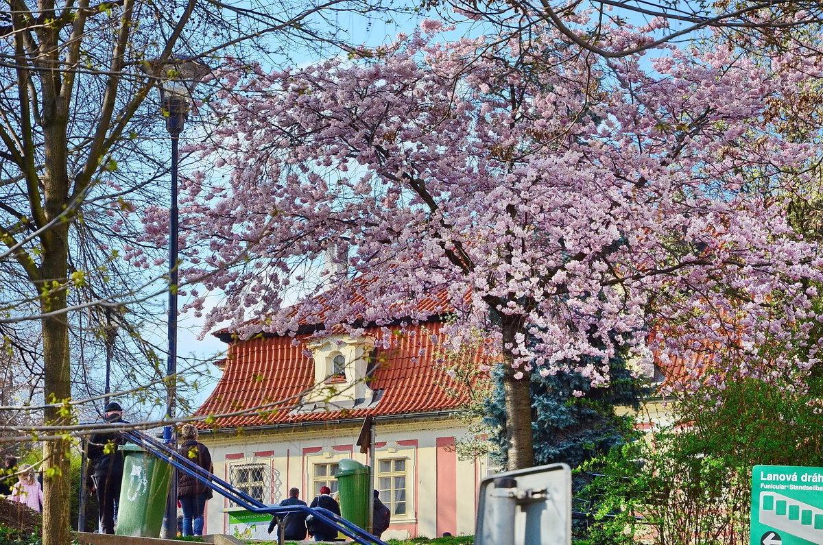 На улице Уезд, Прага - Владимир Брагилевский