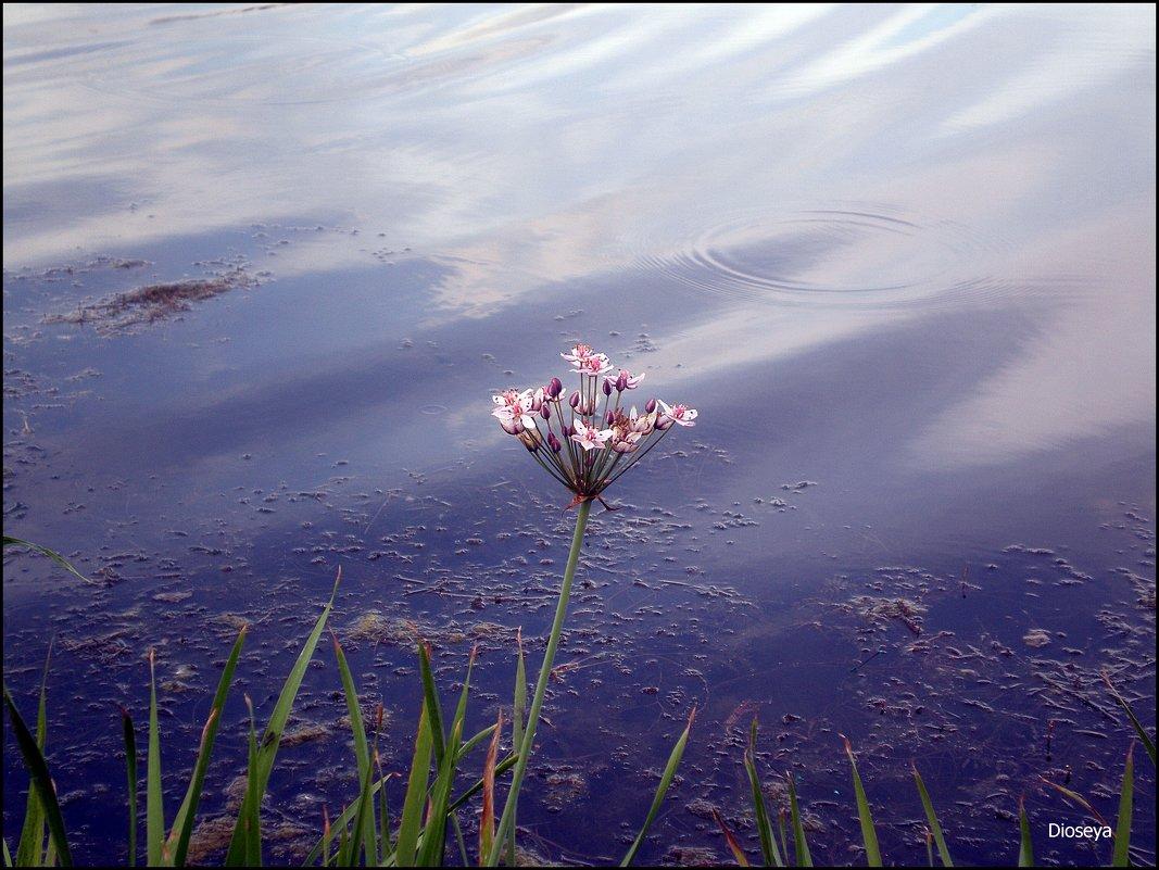 Цветочек у воды - Татьяна Пальчикова