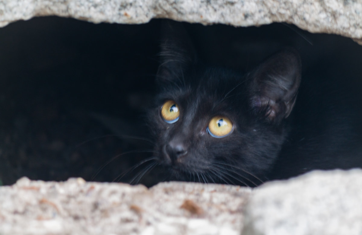 Черный кот - Александр Вельц